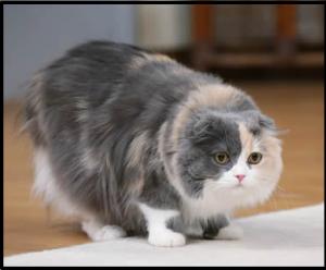 リコちゃん猫