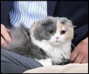 リコちゃん猫3