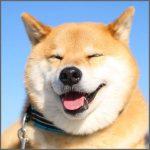 小野慎二郎(柴犬まる飼い主)がマツコの知らない世界に出演!年収は?